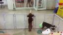 Dans eden köpek