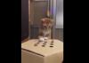 Delik kutudaki parmağı yakalamaya çalışan kedi