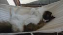 Kedi yatağına sonunda alışıyor